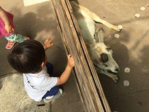 動物園を触る男の子